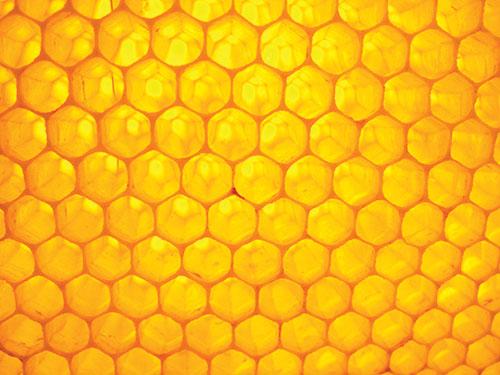 Žiť s múdrosťou včiel