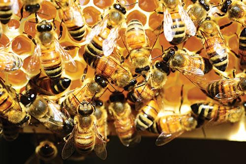 Prírodný liek – med