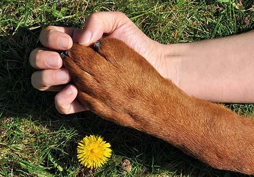 Zvieratá v rodine: Život so zvieraťom